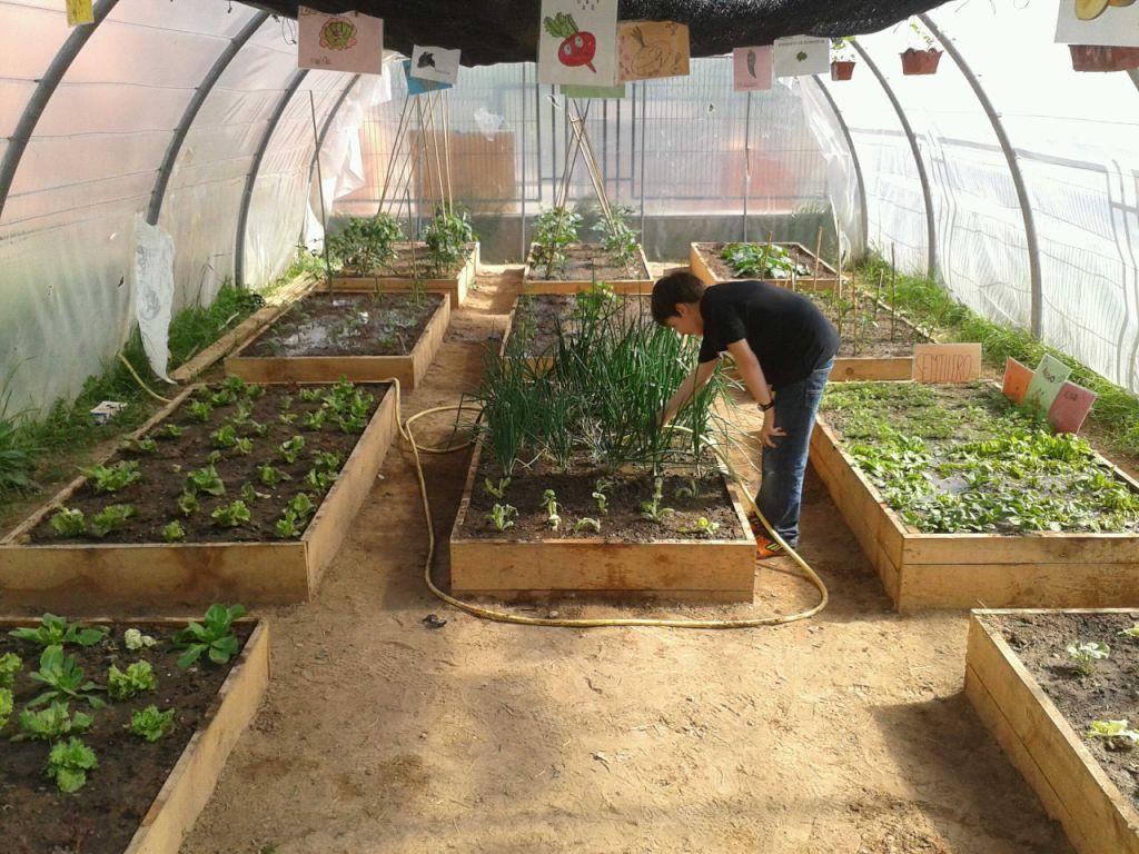 Proyecto huerto escolar nalda for Que es un huerto escolar